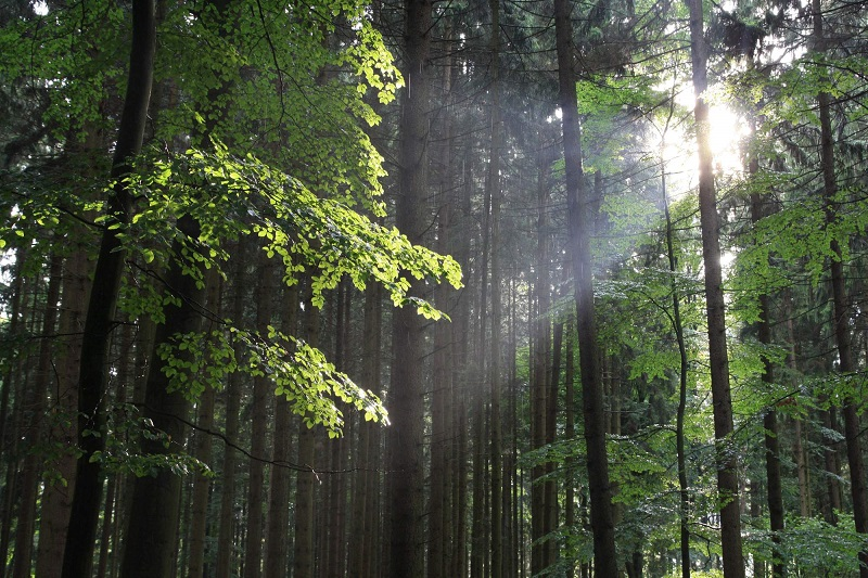Tábor Bochnín v lesích Vysočiny